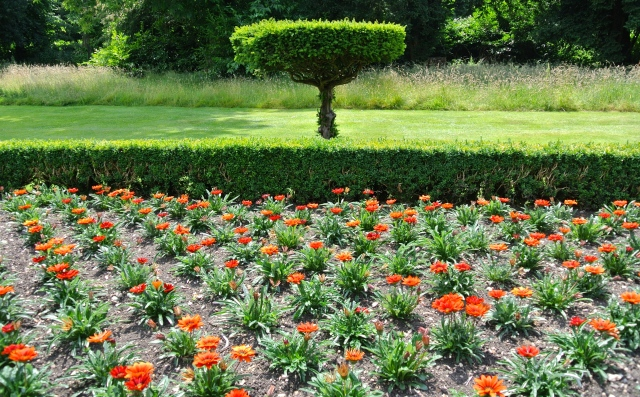 Glorious Gazania's make a statement in the Long Garden