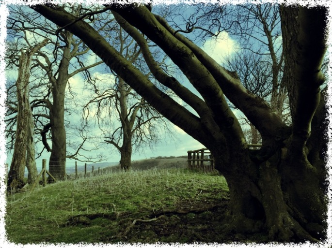 Winter is the ideal time to enjoy the view across to Coombe Hill before the leaf canopy fills the sky.