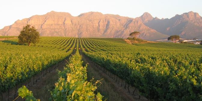 kleine-zalze-vineyards
