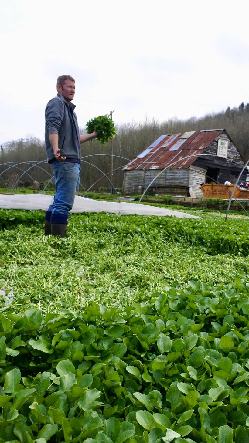 Watercress farmer, the last of his kind